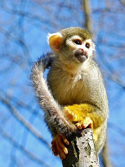 Mono ardilla en Faunia (Madrid)